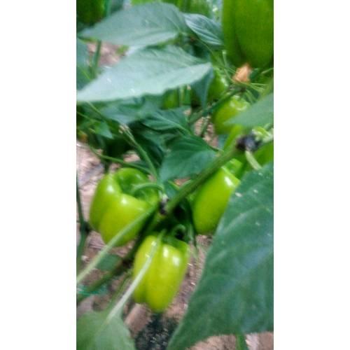 Organik ürün paketi Çetin yöresel Antalya /DEMRE
