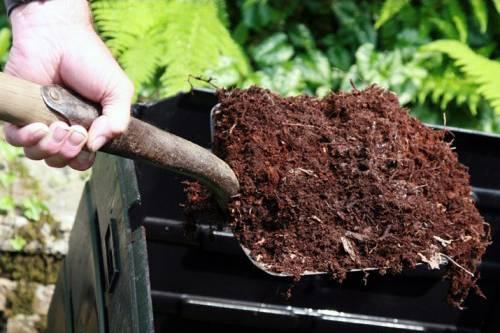 Süs Bitkilerinde Gübreleme Nasıl Olmalı?